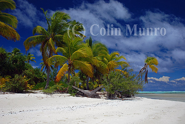 Coconut palms trees and white sand beach and blue sky, Tapuaetai island (one foot island), Aitutaki atoll, Cook Islands. Image MBI000566.