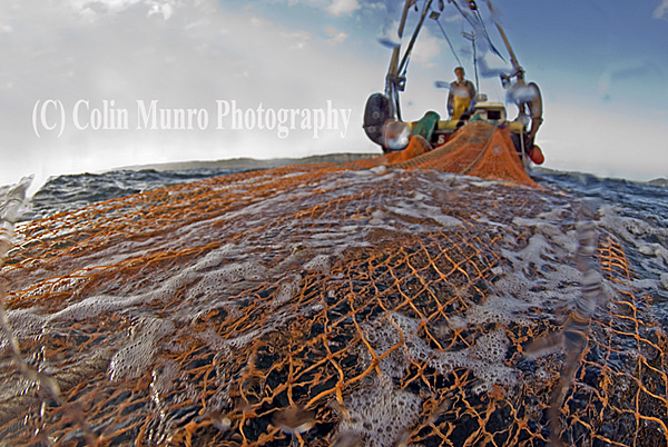 Trawl net close up as it is hauled to the surface, Lyme Bay, Southwest England, Colin Munro Photography