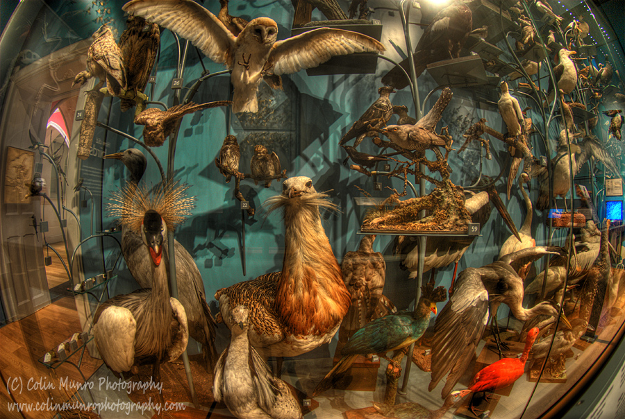 Birds of a feather exhibition, Royal Albert Memorial Museum (RAMM) Exeter. Colin Munro Photography. www.colinmunrophotography.com