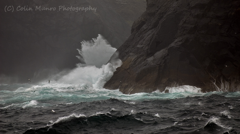 Fulmars and gannets over stormy seas, St Kilda, West Scotland. Colin Munro. www.colinmunroimages.com