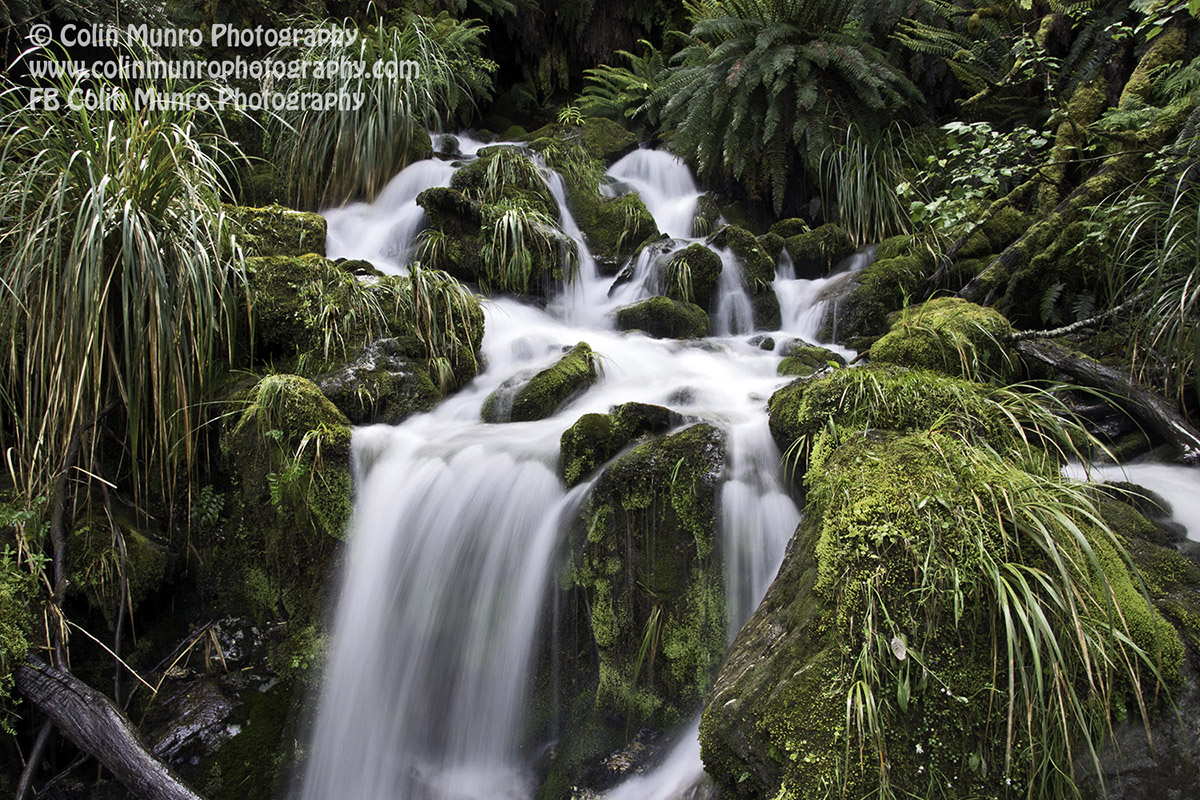 A mountain stream cascades down the densely wooded valley slopes. Rees Dart Track, Mount Aspiring National Park. copyright Colin Munro Photography